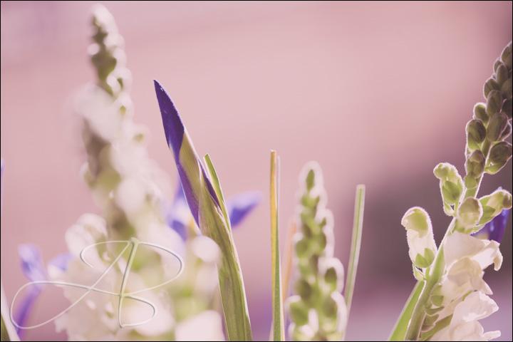 iris Iris and Snapdragon